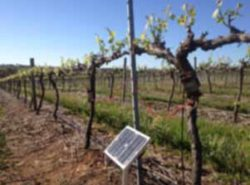 Monitoring Sap Flow in Grapevines