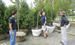 Tree Selection with PSY1 Stem Psychrometer