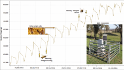 Bee Hive Meter for Monitoring Colony Strength and Productivity