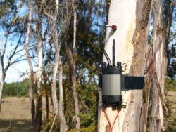 SFM1 Installed in a Eucalypt