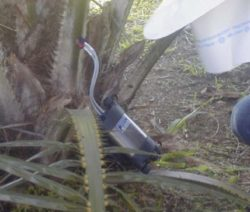 Heat Ratio Method to Measure Sap Flow in Papaya & Oil Palm