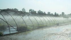 Developing A Nursery Irrigation Regime